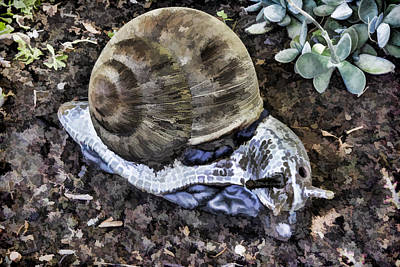 Digital Art - Garden Snail by Photographic Art by Russel Ray Photos