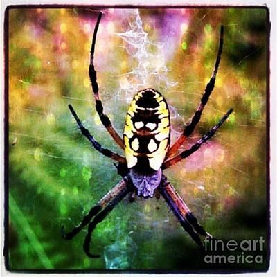 Garden Spider Art Print by Christy Bruna