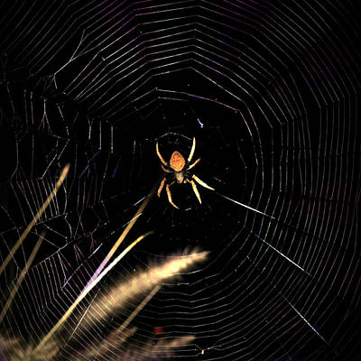 Photograph - Garden Spider by Joseph G Holland