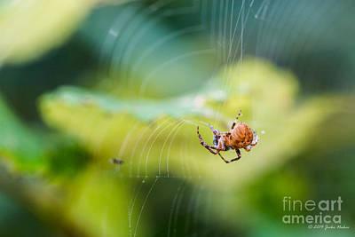 Water Droplets Sharon Johnstone - Garden Spider Orbweaver by Jivko Nakev