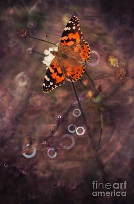 Solitaire Ring Photograph - Garden Stories Xix by Jaroslaw Blaminsky