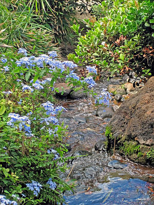 Photograph - Garden Stream by Shanna Hyatt