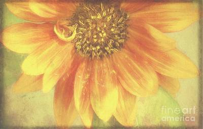 Photograph - Garden Sunshine by Peggy Hughes