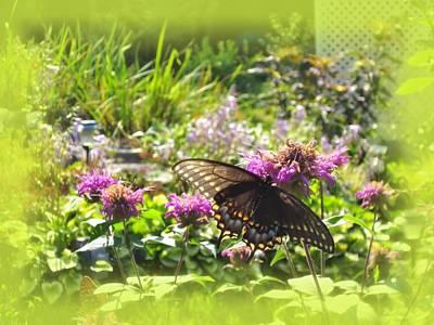 Photograph - Garden Swallowtail by MTBobbins Photography