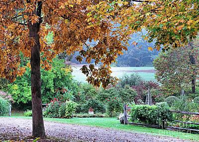 Photograph - Garden Tree by Janice Drew