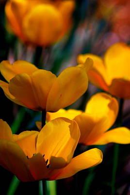 Photograph - Garden Tulips by Kathy Sampson