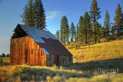 Photograph - Garden Valley Barn by Sam Rosen