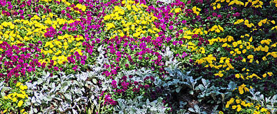 Garden Variety Art Print by Aimee L Maher Photography and Art Visit ALMGallerydotcom
