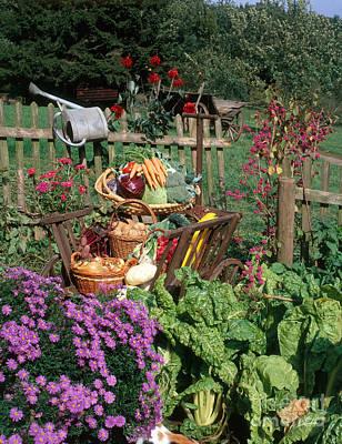 Photograph - Garden Vegetable Still-life by Hans Reinhard