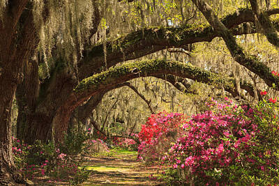 Print featuring the photograph Garden View by Patricia Schaefer