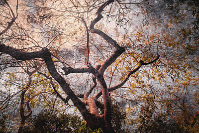 Photograph - Garden View Series 18 by Carlos Diaz