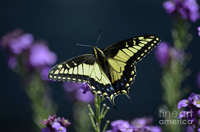 Photograph - Garden Visitor by Afroditi Katsikis