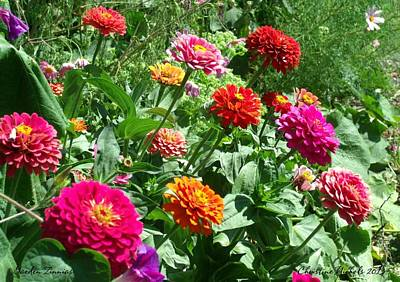 Photograph - Garden Zinnias by Christine Nichols