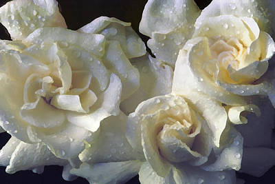 Photograph - Gardenia I by Michael Moschogianis