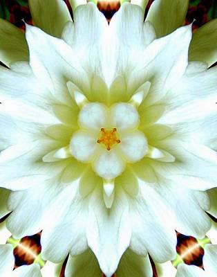 Photograph - Gardenia Kaleidoscope 1 by Sheri McLeroy