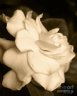 Photograph - Gardenia by Lee Owenby