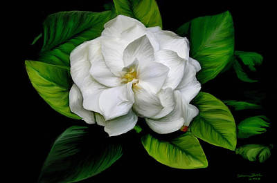 Painting - Gardenia by Sharon Beth