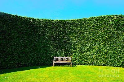 Agapanthus Umbrellatus Photograph - Gardening Zones by Boon Mee