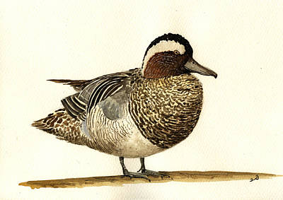 Sea Bird Wall Art - Painting - Garganey Duck by Juan  Bosco