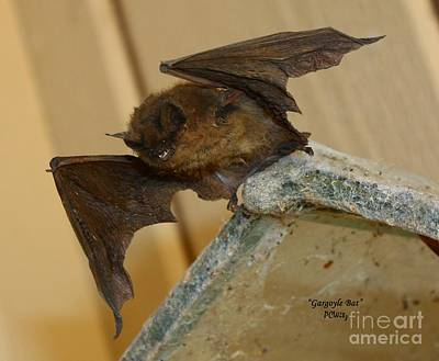 Photograph - Gargoyle Bat by Patrick Witz