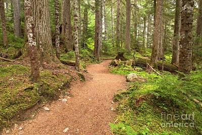 Photograph - Garibaldi Path To Cheakamus Lake by Adam Jewell