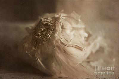Photograph - Garlic 1 by Elena Nosyreva