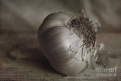 Onion Digital Art - Garlic 4 by Elena Nosyreva