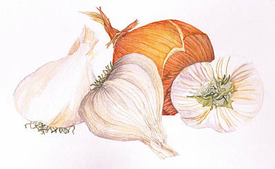 Onion Drawing - Garlic And Onion by Jenny Haslimeier
