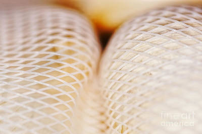 Photograph - Garlic In A Net by Nick  Biemans