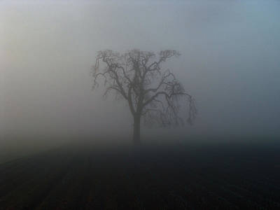 Art Print featuring the photograph Garry Oak In Fog by Cheryl Hoyle