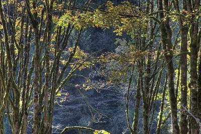 Photograph - Gate Way To The Winters Forest by Donald Torgerson