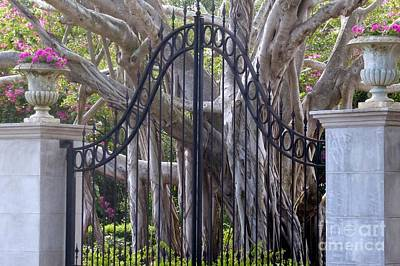Photograph - Gated En Tree by Barbie Corbett-Newmin