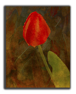 Photograph - Gather Ye Rosebuds by Dale Stillman