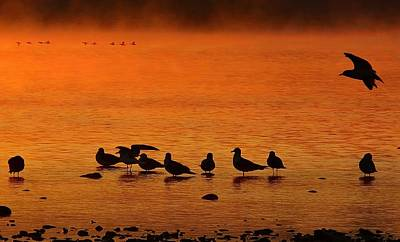 Photograph - Gathering At Sunrise by Nick Kloepping