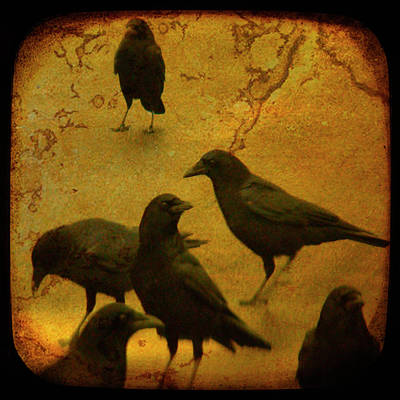 American Crow Photograph - Gathering by Gothicrow Images