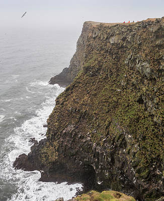 Gathering Photograph - Gathering Guillemot Eggs On Cliffs by Panoramic Images