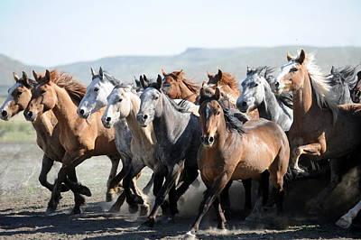 Gathering Horses Art Print by Lee Raine
