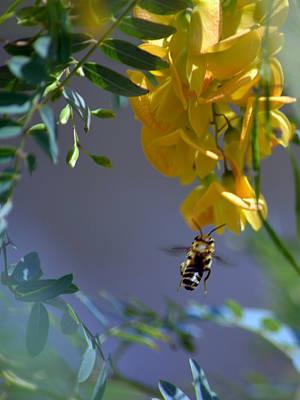 Pollinate Digital Art - Gathering Nectar by Renee Barnes