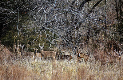 Photograph - Gathering Of Bucks by Robert Camp