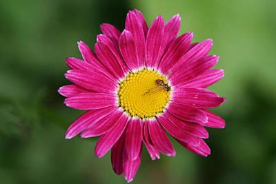 Photograph - Gathering Pollen by Heidi Hermes