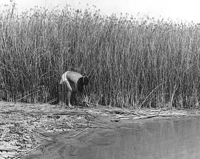 Photograph - Gathering Tule Bulrushes by Underwood Archives Onia