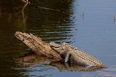 Photograph - Gator Alley Daphne Alabama by Carol M Highsmith