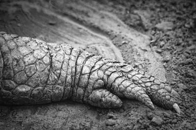 Photograph - Gator Toes by Carolyn Marshall