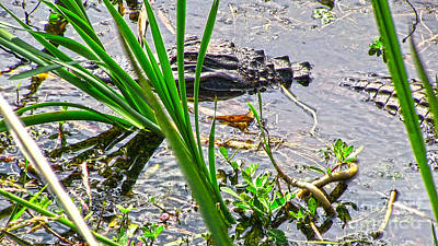 Photograph - Gator Baby by D Wallace