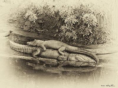 Gator Back Ride Art Print by Kathy Ponce