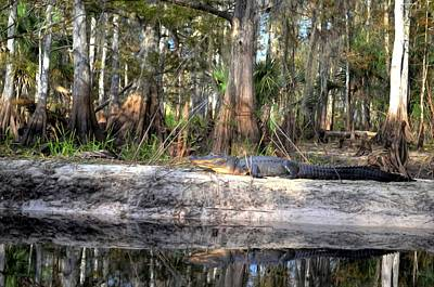 Gator Country Art Print by Bob Jackson