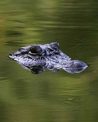 Gator Eyes 8x10 Art Print by David Lynch
