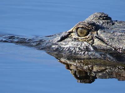 Amphibians Photograph - Gator Eyes  by Zina Stromberg