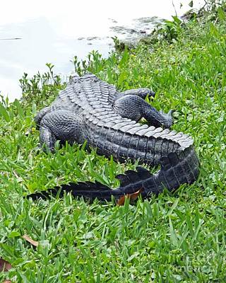 Photograph - Gator In The Grass by Lizi Beard-Ward