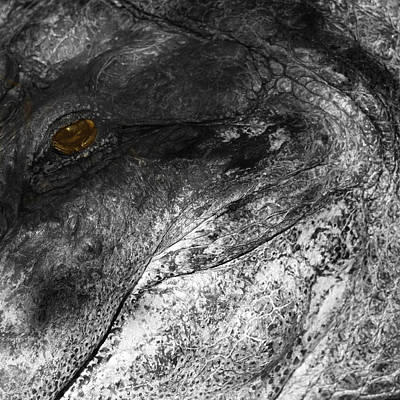 Reptiles Royalty-Free and Rights-Managed Images - Gator Jaw by Joseph G Holland